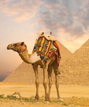 Hurghada329€