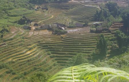 Riisipõllud Vietnamis (Põhja-Vietnam, Sapa)