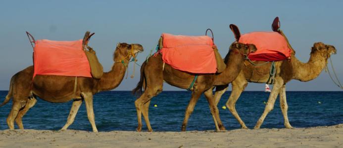 a7e9c17e74f Tuneesia - värav idamaade eksootikasse - Tuneesia reisid Tallinnast ...